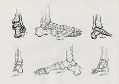 Illustration scientifique os de pieds