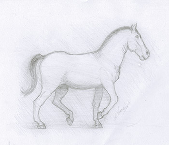 Cheval dessiné au crayon à papier  dessinateur Vectanim 2011