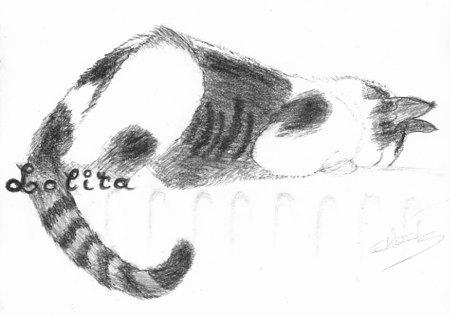 Croquis au crayon de ma chatte Lolita sur le radiateur