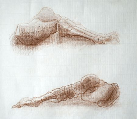 2 dessins d'os du pieds exécutés au crayon brun sur papier Ingres