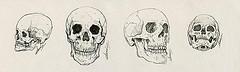 4 illustrations de crâne humain à l'encre