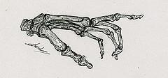Illustration scientifique l'anatomie de la main