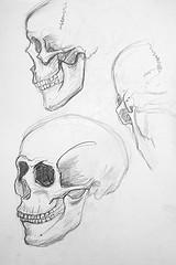 3 études de crâne humain au crayon à papier