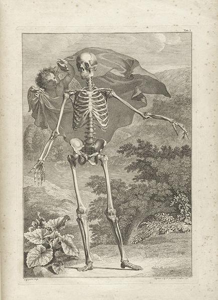 Livre anatomie Tabulae sceleti et musculorum corporis humanis
