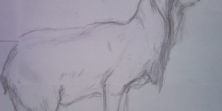 Sortie dessin animalier