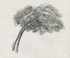 Un arbre illustré à partir d'une illustration de Le-Lorrain