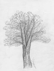 Dessin une tude d 39 arbre au crayon papier - Dessin arbre nu ...