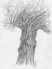 Dessin d'arbre au crayon le Tamaris