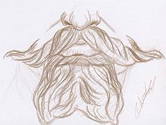 Etude de moustaches dessinée au crayon brun