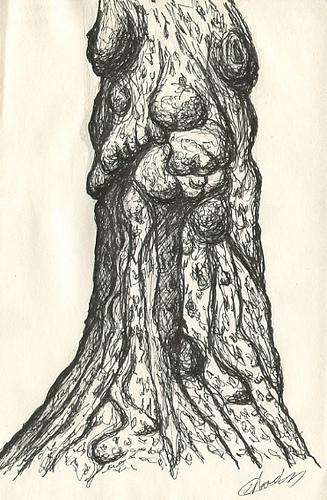 Illustration botanique d'arbre noir