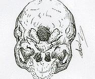 Illustration au feutre d'un crâne humain vue d'en bas