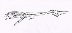 Dessin scientifique d'anatomie ostéologie avant bras Pronation