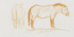 Croquis de cheval de Przewalski dessinés au crayon de couleur