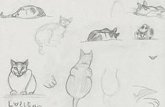 8 croquis de chat dessiné au crayon