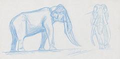 Croquis au crayon de couleur d'elephas antiquus