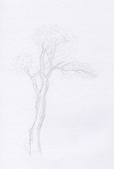 Etude d'arbre au crayon