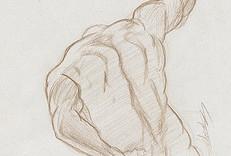 Croquis étude des muscles du dos