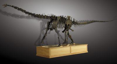 dinosaure Diplodocus présenté à l'exposition Trésors de dinosaures 75013 Paris