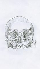 Illustration d'anatomie ostéologie crâne humain sans la mâchoire