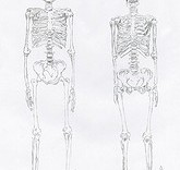 Illustration d'anatomie squelette de femme et squelette d'homme