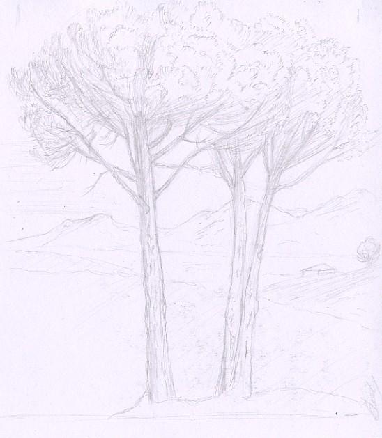 Etude de pins, dessin d'après Le Lorrain par Fabien Lesbordes