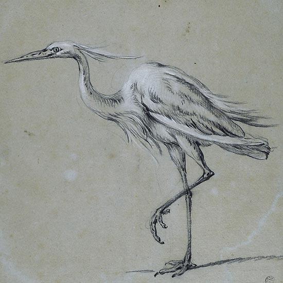 Jean-Baptiste Oudry, Grande aigrette, département des Arts graphiques, musée du Louvre