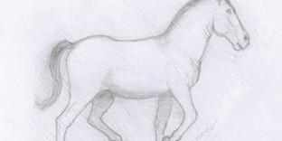 Cheval dessiné au crayon à papier © Fabien Lesbordes dessinateur Vectanim 2011