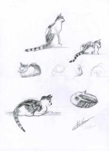 Croquis de ma chatte Lolita, 6 dessins au crayon © Fabien Lesbordes dessinateur Vectanim 2011