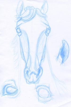 Croquis de tête de cheval dessiné au crayon de couleur © Fabien Lesbordes dessinateur