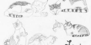 Six croquis de chat Lolita © Fabien Lesbordes dessinateur