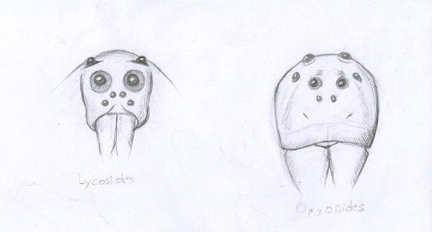 2 croquis au crayon à papier d'yeux d'araignées