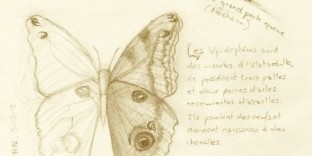 Croquis de papillon avec chenille © Fabien Lesbordes dessinateur