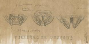 Dessin animalier 3 filières d'araignees © Fabien Lesbordes dessinateur