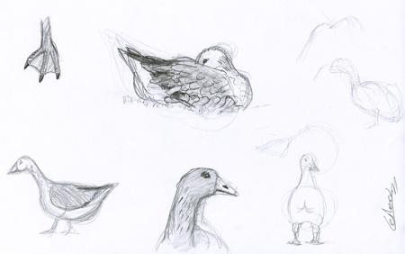 Six croquis d'oies domestiques dessinées au crayon-à-papier