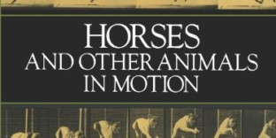 Photographies animaux mouvements livre Muybridge
