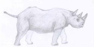 Croquis de Rhinocéros dessiné au crayon à papier