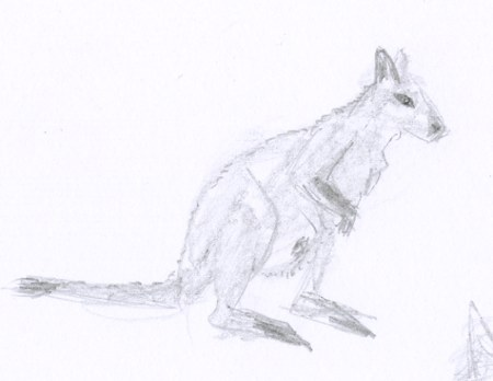 Croquis d'animal le marsupial wallaby