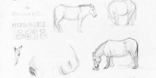 Six croquis de cheval de Prjewalskii dessin au crayon à papier