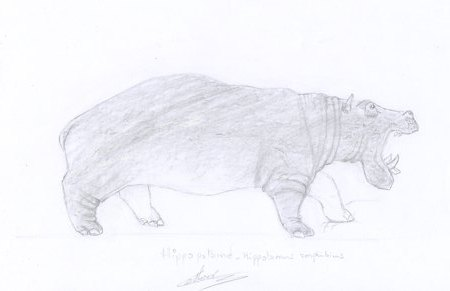 Dessin animalier d'hippopotame naturalisé