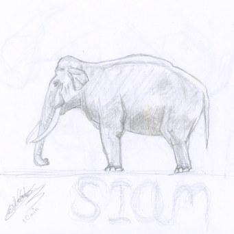 Croquis animalier de Siam, éléphant d'Asie