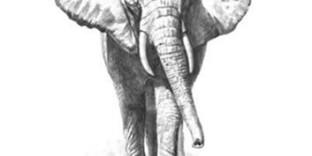 Livre apprendre les méthodes pour dessiner les animaux facilement