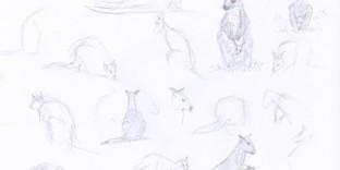 Croquis rapides de kangourou walibi