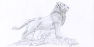 Dessin animalier le Lion et l'autruche dessinés au crayon
