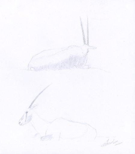 Deux oryx couchés dessiné au crayon à papier