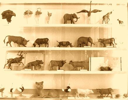 Vitrine des sculptures animalières à la grande galerie de l'évolution