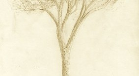 Dessin d'arbre exécuté au jardin-du-Luxembourg, jardin du Sénat français