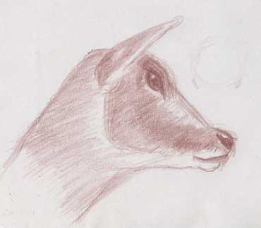 1 dessin daim moucheté de profil
