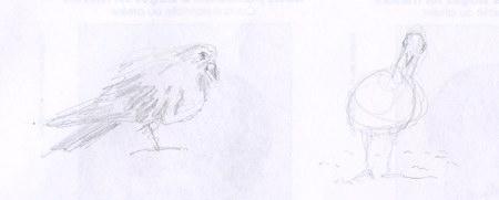 2 esquisse croquis d'oiseau les pigeons