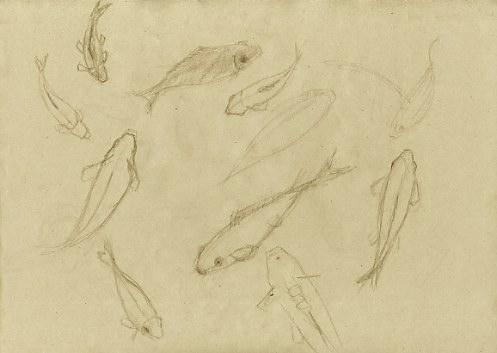 Carpes et poissons rouges esquissées au crayon