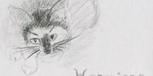 1 croquis chaton vue contre-plongée dessiné au crayon à papier